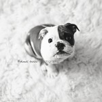 Gus | 8 weeks new {Bloomington Jacksonville Illinois Pet Photographer}