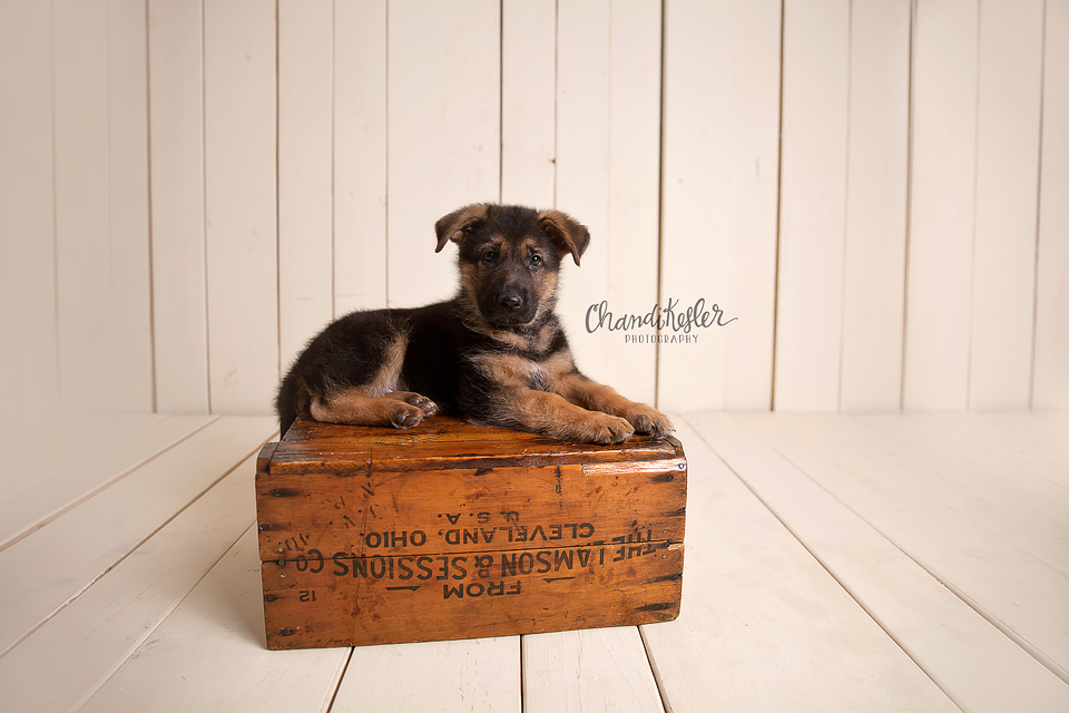 Monticello Puppy Photographer