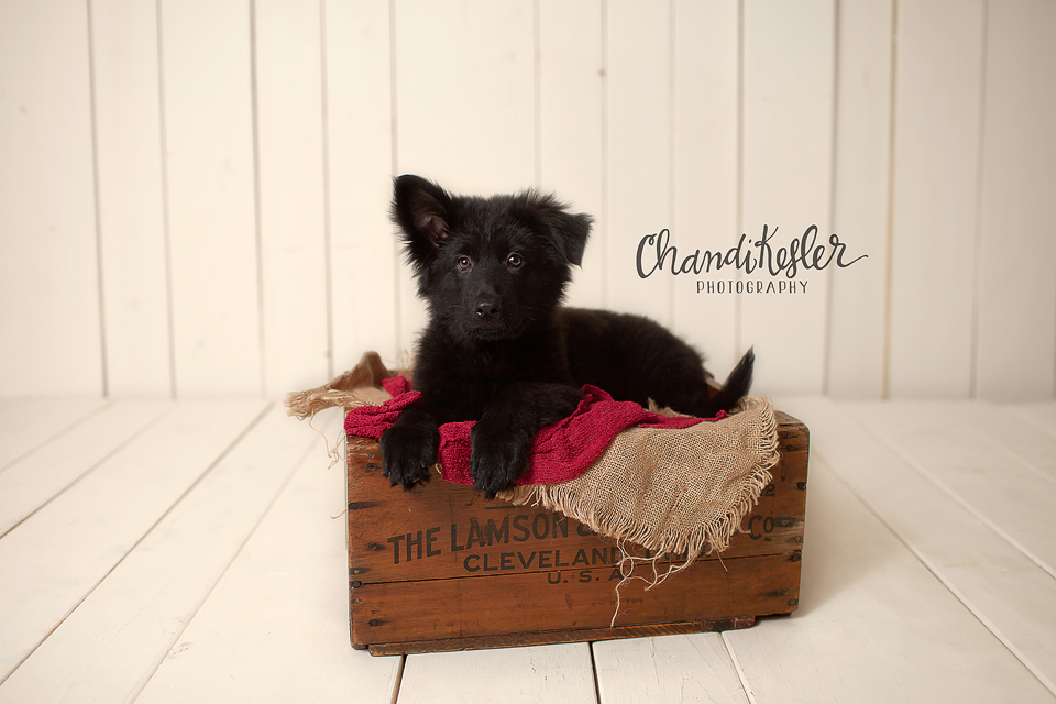 Champaign Illinois Pet Photographer 4028