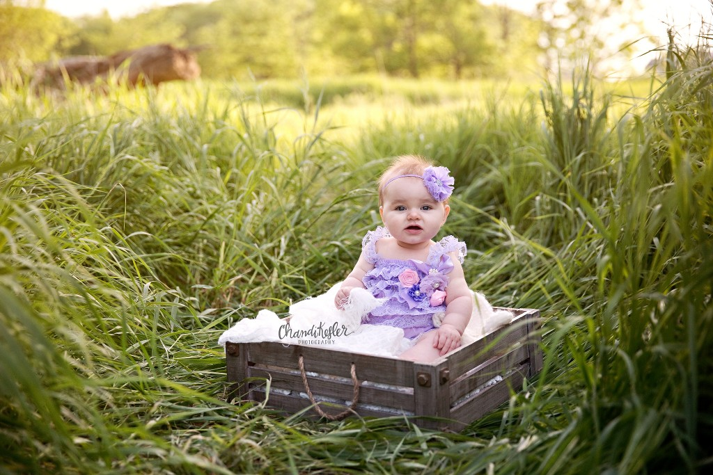 6 month baby photos | Bloomington iL Photographer | Chandi Kesler Photography