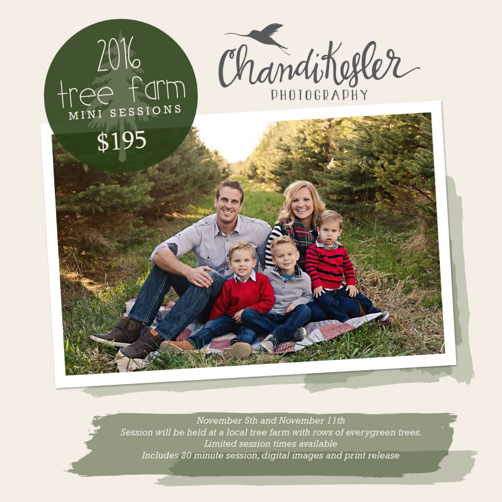 Bloomington IL Tree Farm | Chandi Kesler Photography